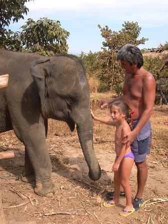 Ko Lanta, Thailandia: Elephants on Lanta