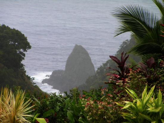 Scene from Jurassic Park along the road to Hana - Picture of