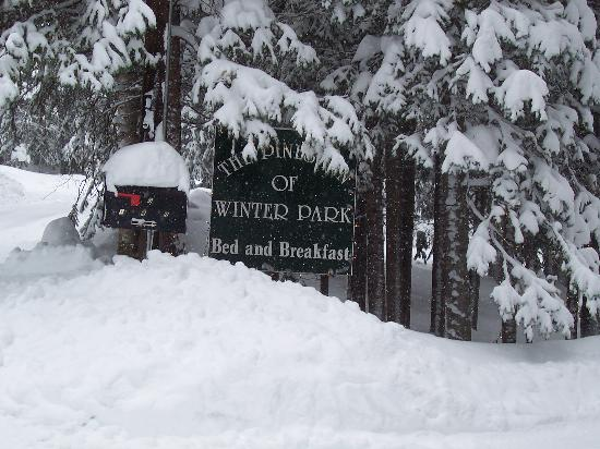 Pines Inn of Winter Park Foto