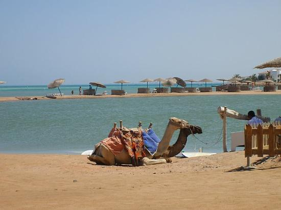 Kairo, Mesir: Red Sea