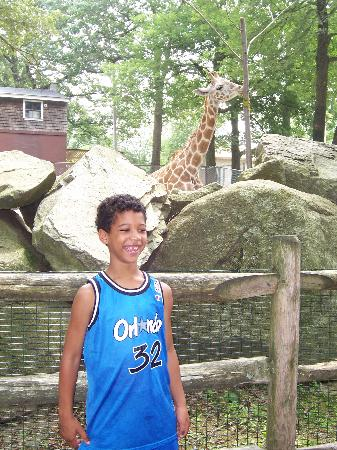 Mendon, MA: Am I almost as tall as the giraffe?
