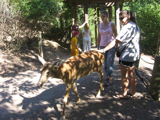 Pittsburgh Zoo & PPG Aquarium : Get Up Close and Personal with the Deer