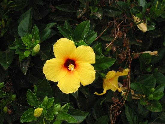 Tropical Island Flowers: Hula Dance By Local Students