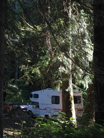 Quilcene, WA: Campsite at Dungeness Forks Campground