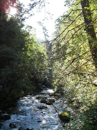 Quilcene, WA: Grey Wolf River at Dungeness Forks Campground