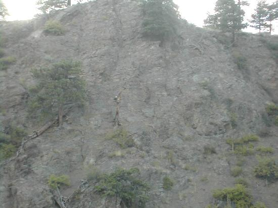 Gate of the Mountains near Holter Lake (Bald Eagle in center)