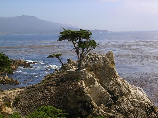 Monterey Peninsula, Californie : The Lone Cypress