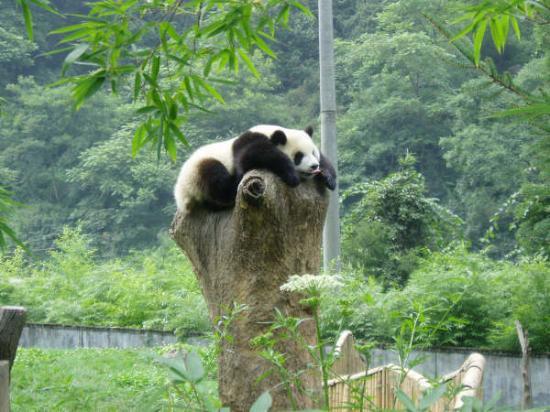 Bilde fra Sichuan