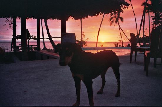 Mango Bay Resort Fiji: Most wonderful dog on the planet