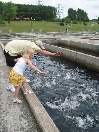 Shepherd of the Hills Fish Hatchery Photo