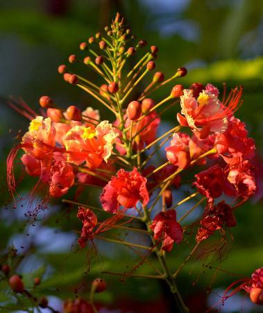 Zanzibar, Tanzania: flower