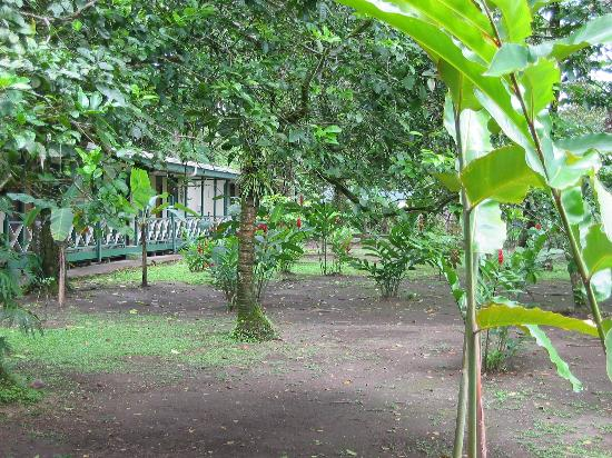Tortuguero Jungle Lodge: landscaping at Jungle Lodge