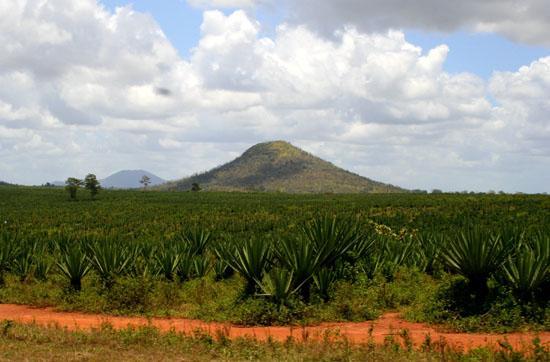 Foto de Amani Nature Reserve
