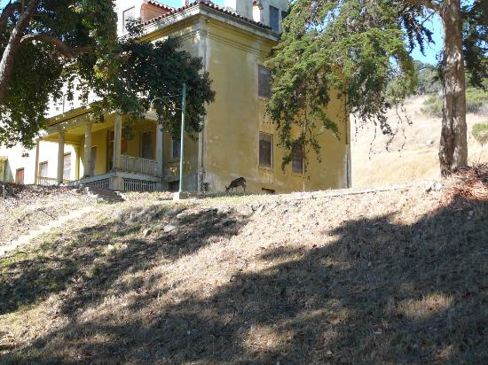 Angel Island State Park: This is one of the old buildings on the island; can you spot the deer?
