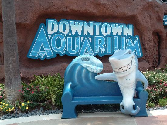 Houston, TX : Dowtown Aquarium