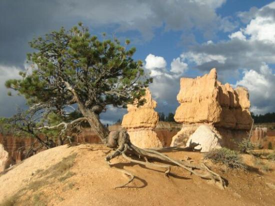 Юта: bryce canyon