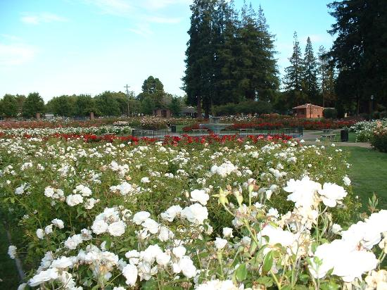 Municipal Rose Garden San Jose 2018 All You Need To Know Before You Go With Photos