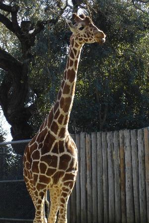 C Lion Review Sacramento Zoo - 2018 ...