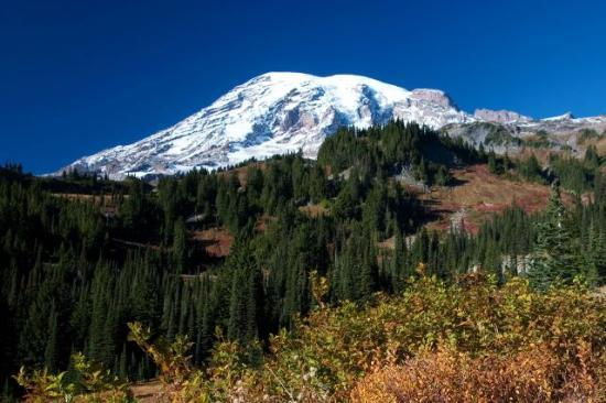 Parc national de Mount Rainier, Etat de Washington : Paradise Valley