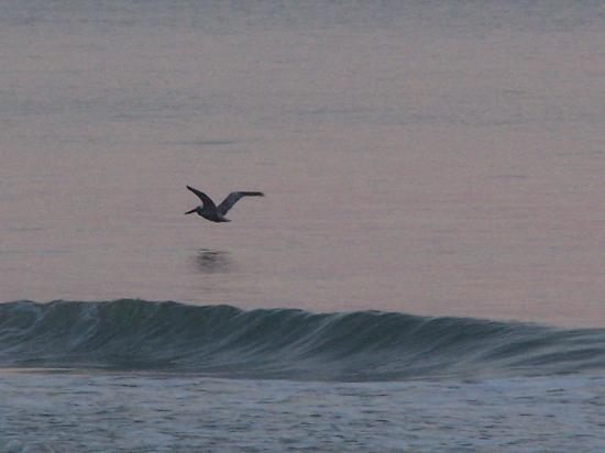 New Smyrna Beach, FL: bird and beach