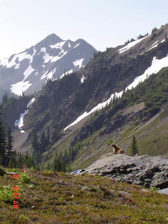 Olympic National Park รูปภาพ