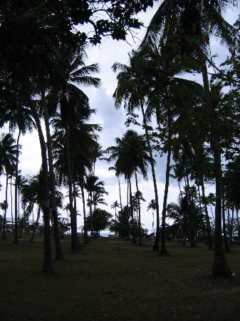 Cabo Rojo, Puerto Rico: A Field of Palms