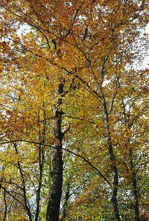 River Spirit Retreat: Lovely and peaceful surrounding woods