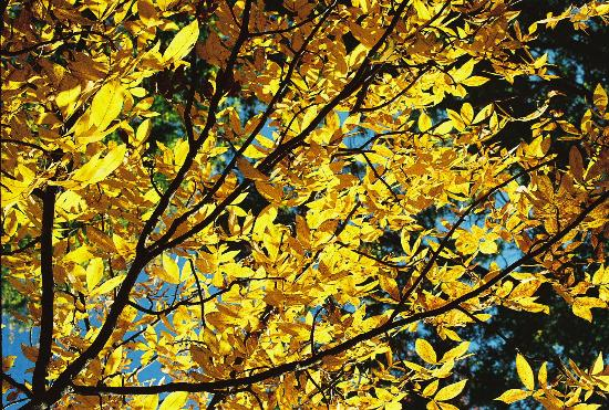 River Spirit Retreat: Golden Woods