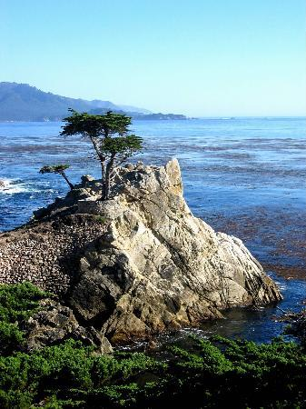 ‪‪Pebble Beach‬, كاليفورنيا: Pebble Beach Tree‬