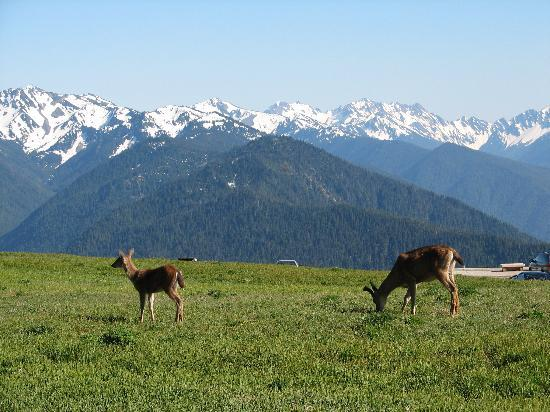 Olympic National Park, WA: Hurricane Ridge