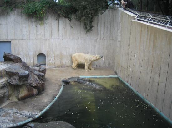 Zoo de la Palmyre : neck ache