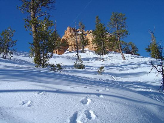 Parque Nacional Bryce Canyon, UT: Hiking in the snow was great!  All alone with the beauty of nature.