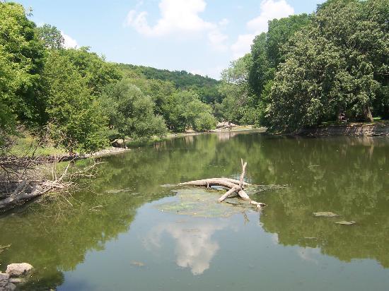 Buffalo Park Forest Preserve