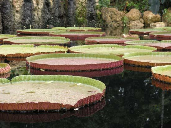 Botanical gardens picture of new york botanical garden bronx tripadvisor for Bronx botanical garden free admission