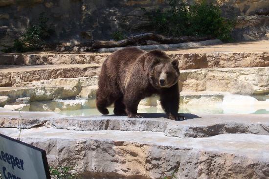 San Antonio Zoo: Nice doggy