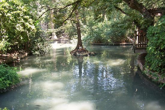 San Antonio Zoo: Nice shaded area
