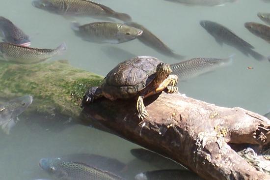 San Antonio Zoo: Getting some sun