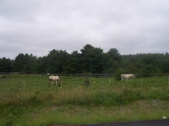 More Southern Maine Countryside