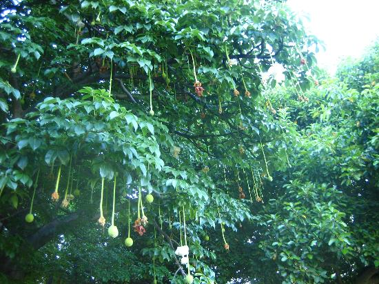 Ala Moana Beach Park: Lush trees