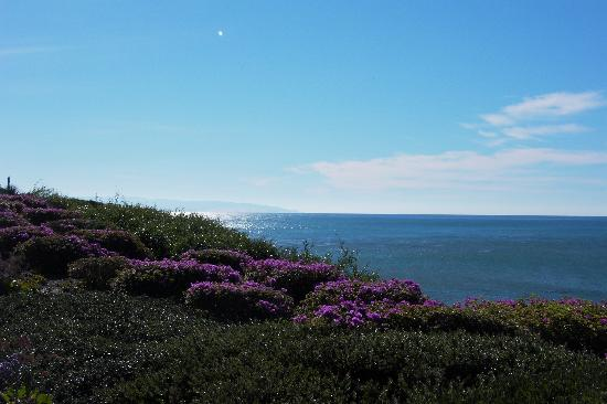 Pismo Beach-billede