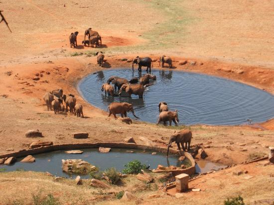 Kikambala, Kenya: View from having lunch on safari