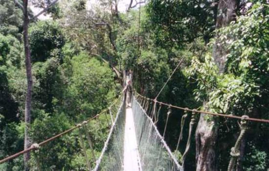 Kelantan, Malaysia: Canopy Walkway at Taman Negara