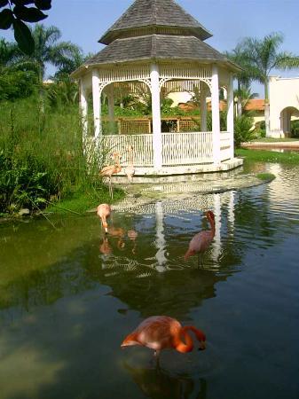 Iberostar Hacienda Dominicus: Le magnifique jardin de l'hôtel