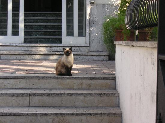 Hotel Capri: The Policemans cat