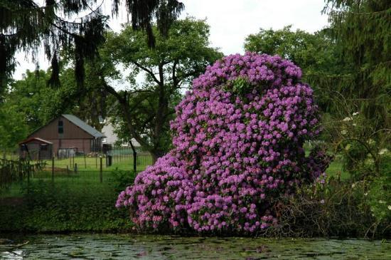 Buitenplaats Vaeshartelt: Tree in bloom