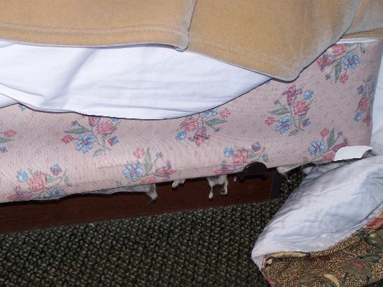 Ramada Metairie New Orleans Airport: Stuffing Coming out of Mattress