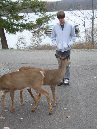 Woodloch Pines Resort: Friendly Deer