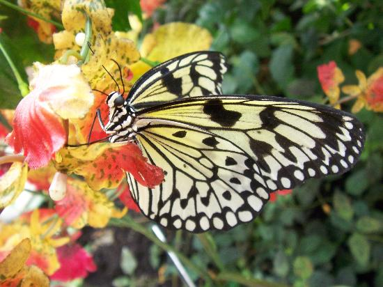 فيينا, النمسا: Schmetterlinghaus - Butterfly 1