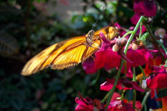 Wien, Österrike: Schmetterlinghaus - Butterfly 2