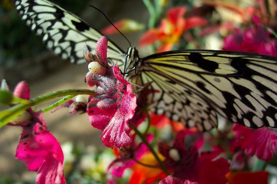 Wenen, Oostenrijk: Schmetterlinghaus - Butterfly 3